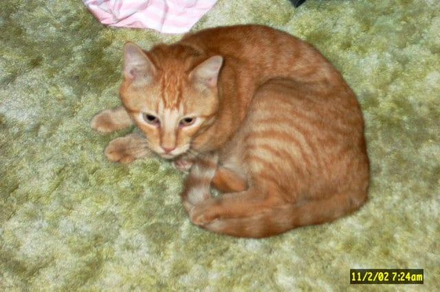 Кот, потерявшийся во время урагана, нашелся спустя 14 лет