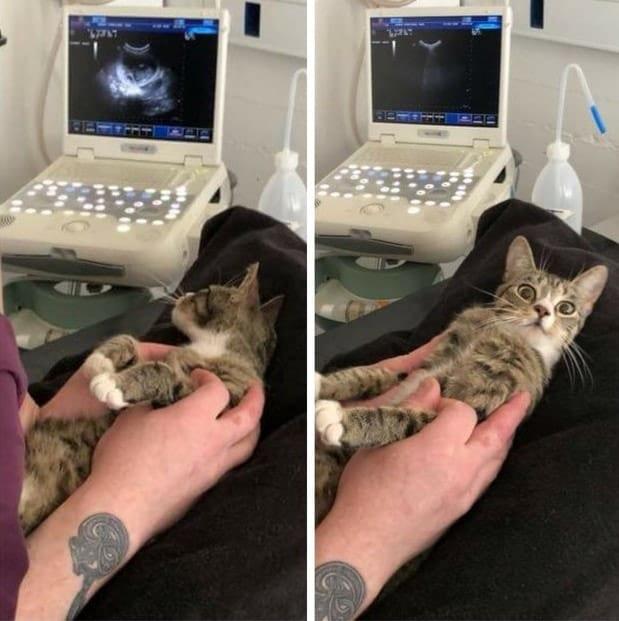 Бесподобная реакция кошки на известие о ее беременности