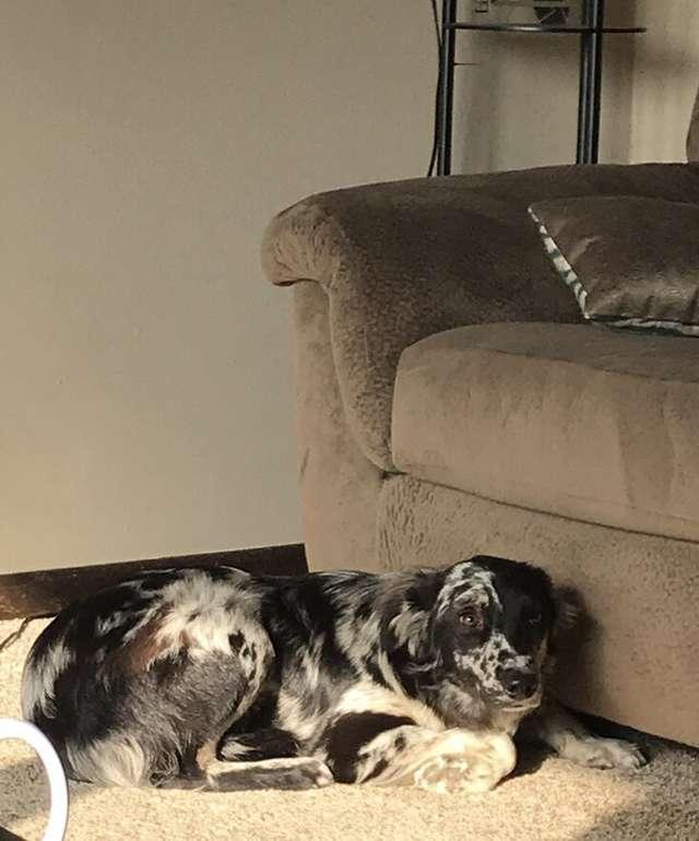 В новом доме собака из приюта боялась даже высунуть нос из-за дивана