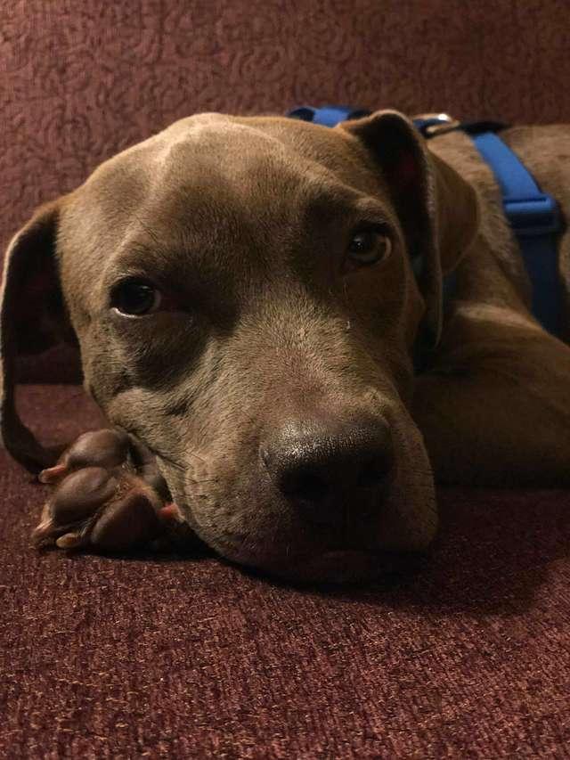 Железнодорожники обнаружили собаку, привязанную на платформе вагона-лесовоза