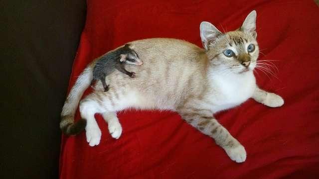 Кошка принесла на спине с прогулки необычного малыша