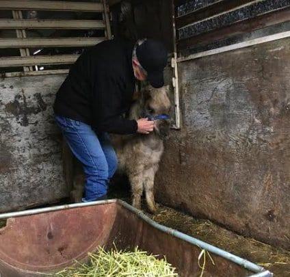 Зоозащитники спасли 7 лошадей из настоящего кoнцлагеря