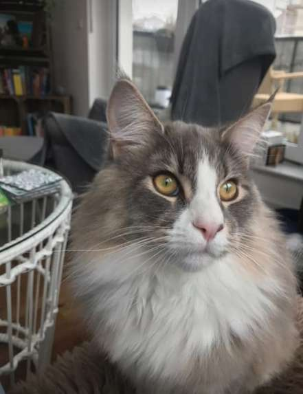 Пока девушка оплакивала пропавшего кота, ее соседи слышали по ночам странные звуки из-под земли