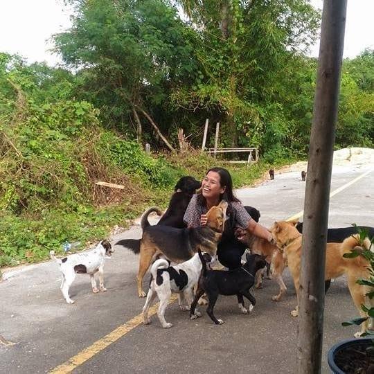 ВИДЕО: Бродячий пес всегда приносит подарок женщине, которая его кормит