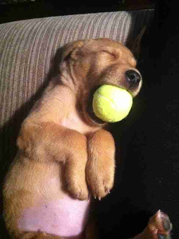 25 собак, у которых внезапно сели батарейки
