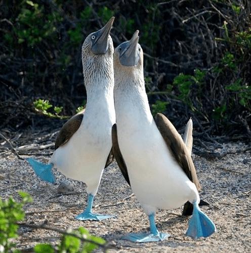 23 фото животных необычных окрасов