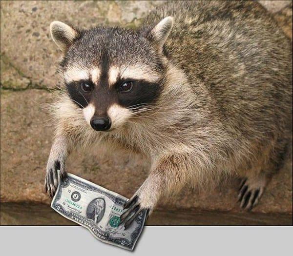 Фотоподборка про енотов, печеньки, денежки и качественную стирку