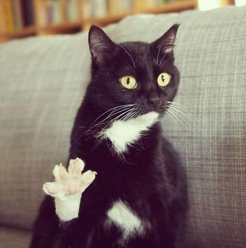 20 черных котиков, которые гарантировано принесут вам сегодня удачу