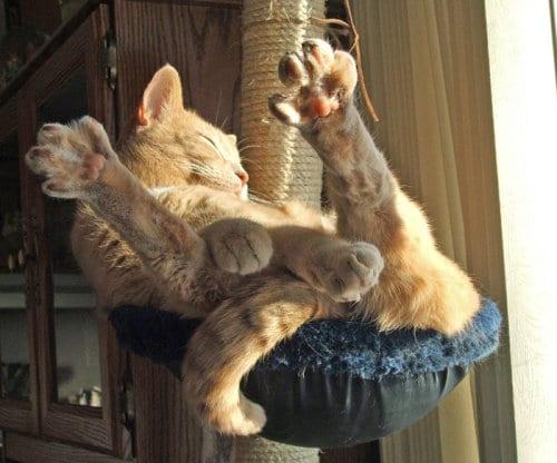 30 фото котиков, которые, кажется, сломались
