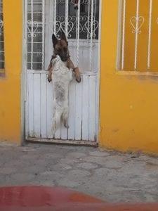 Женщина не знала, зачем собака лезет через забор, но вдруг увидела причину