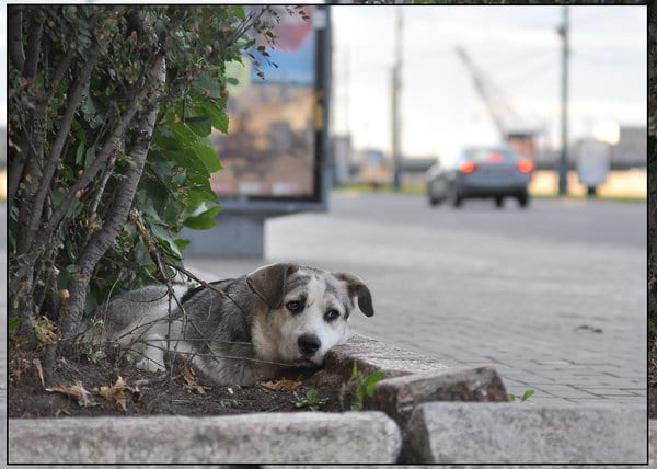 Сбитый машиной пес обреченно лежал на обочине, пока мимо не проехал небезразличный человек