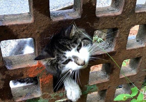 Спасение кошки, застрявшей в водостоке
