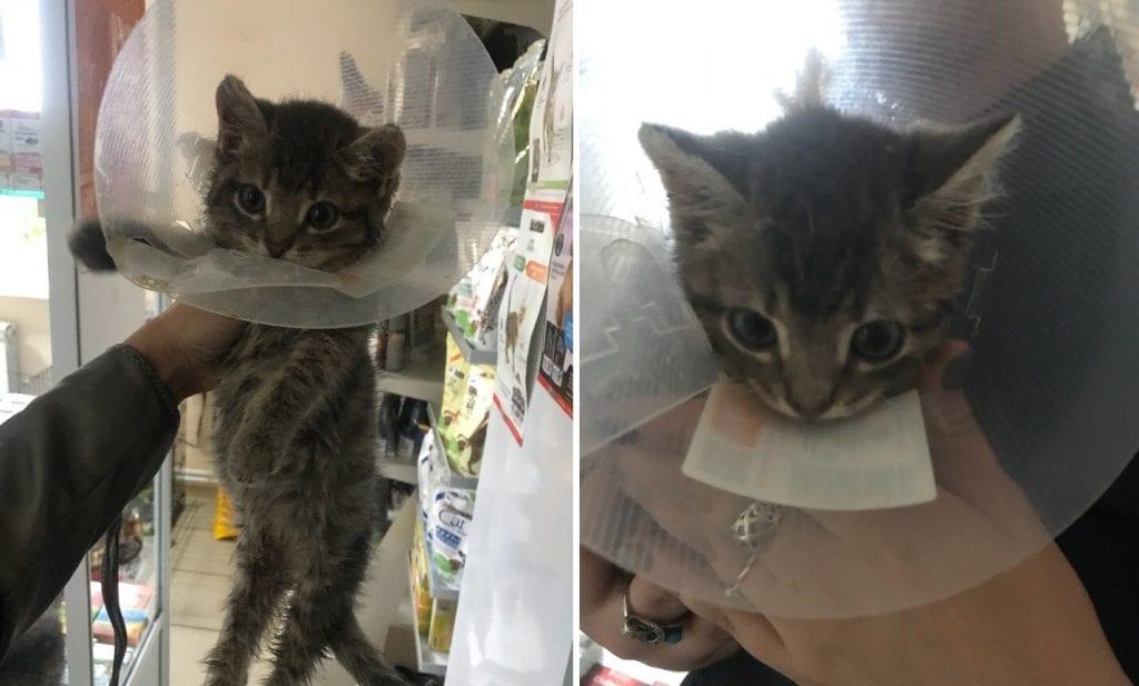 Котенок, облитый клеем, вытерпел несколько операций и нашел семью