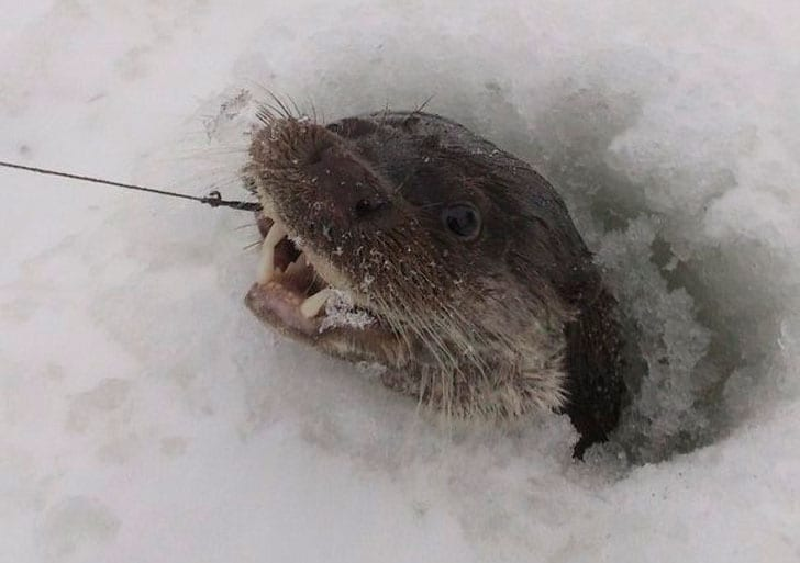 Рыбак поймал под Тверью странную добычу, но не растерялся