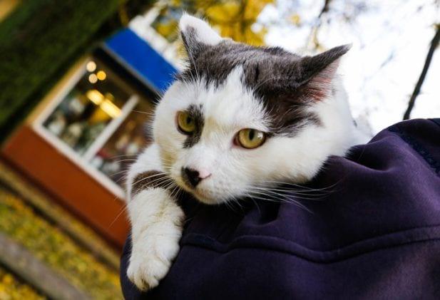 За кота Лёву из Калининграда владельцу предлагали полмиллиона рублей и авто