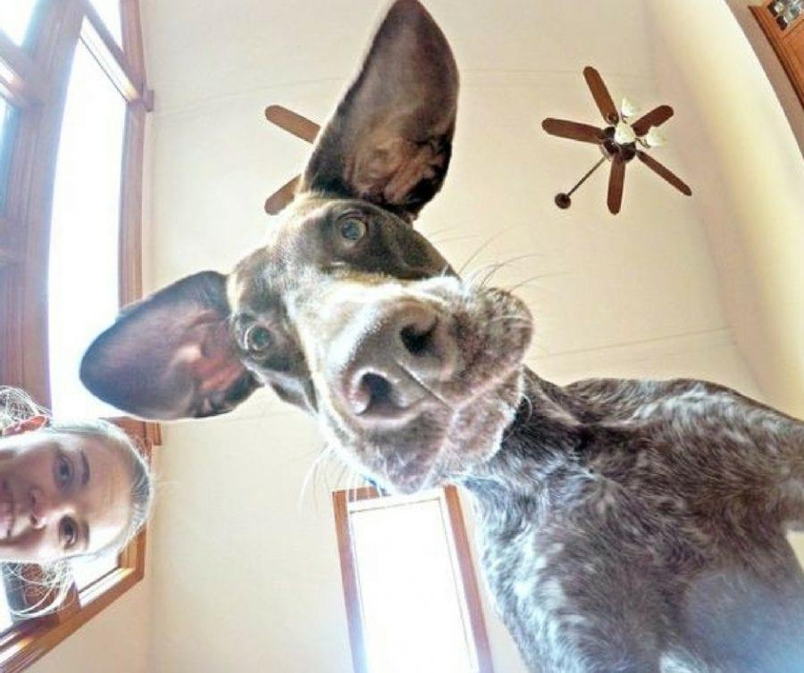 21 фото немного странных собак