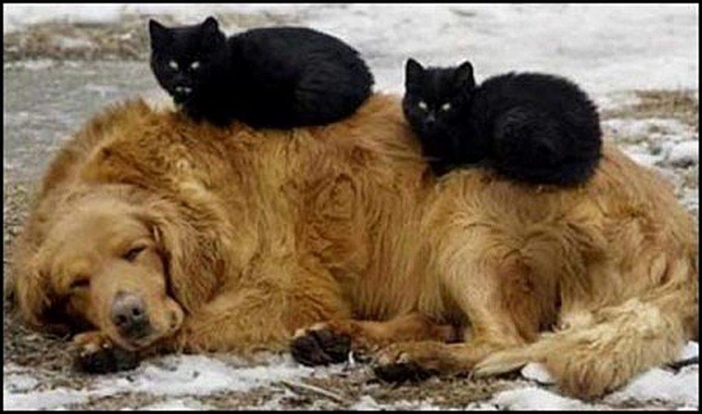 Самые трогательные фотографии бездомных животных, от которых сжимется сердце