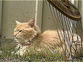 Кошка, потерявшая всех котят, нашла себе 7 новых детей