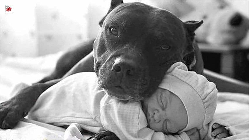5 добрых и героических поступков животных