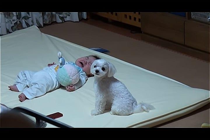 ВИДЕО: Собака придумала свой способ успокаивать ребенка хозяев