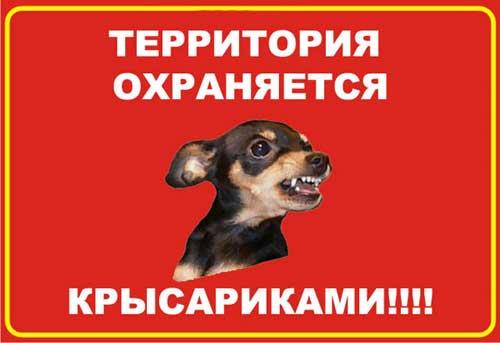"""""""Осторожно, злая собака!"""" - 29 страшных-престрашных предупреждений"""