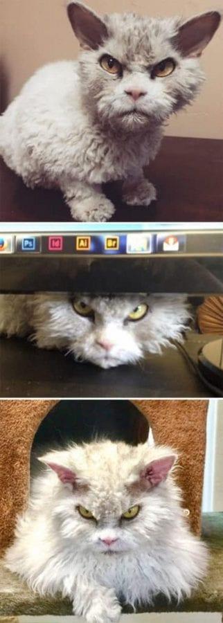 30 фото очень сердитых на вас котов